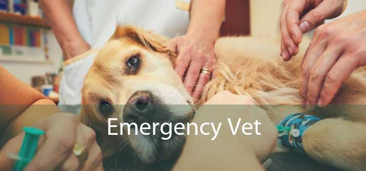Emergency Vet